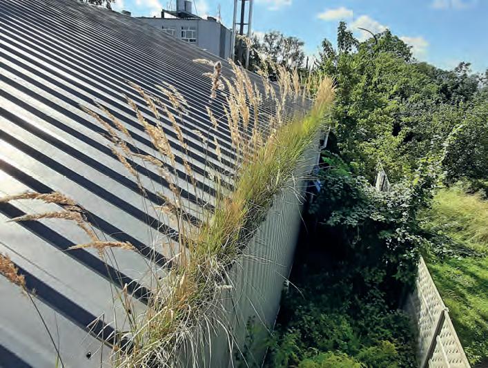 Rynna metalowa jest zarośnięta trawą ikrzewami wpełnym przekroju swojej średnicy. Procesy gnilne izastoiny wody spowodowały już pierwsze oznaki korozji, wkrótce można spodziewać się perforacji rynny. Ciężar takiej roślinności tonawet kilkanaście kilogramów nakażdy metr długości rynny, co dodatkowo nadwyręża elementy systemu